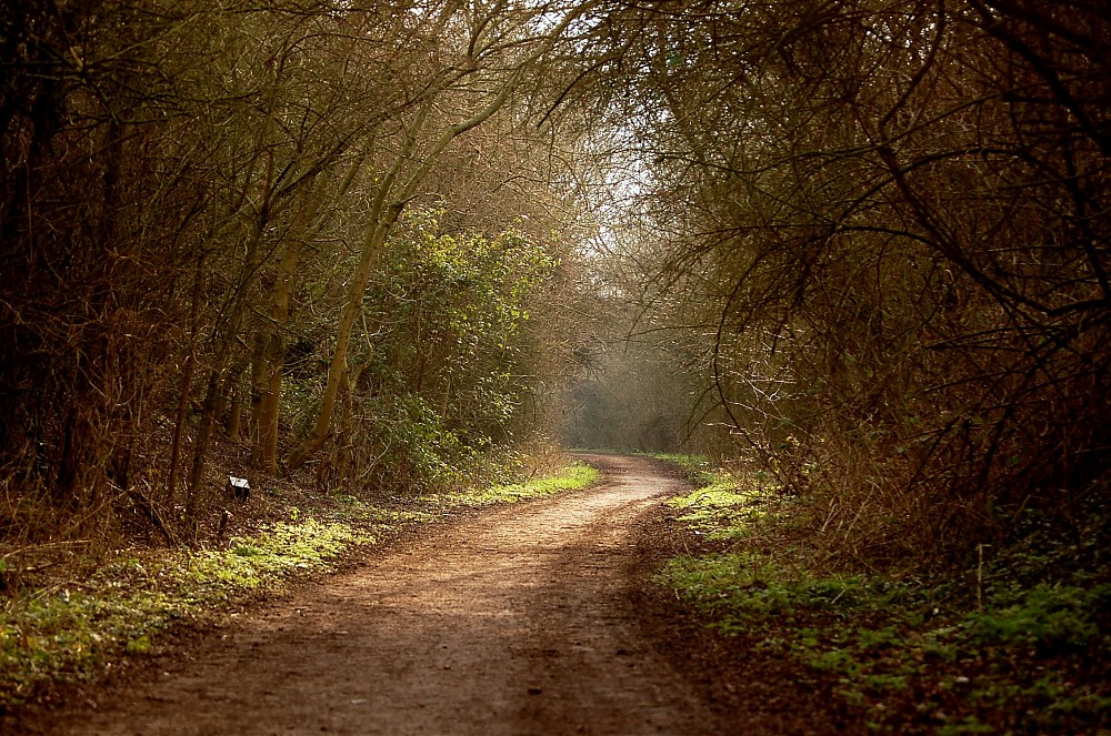 photoblog image ''The way  through the woods''  [Kipling]