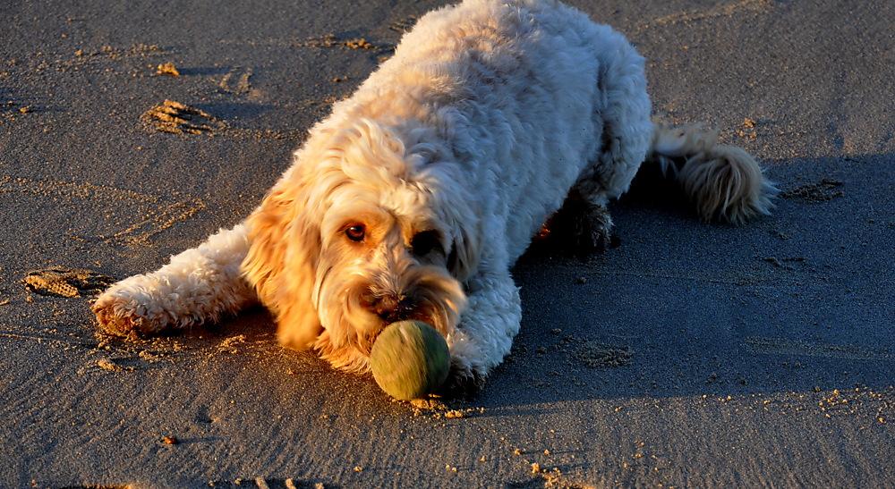 photoblog image weekend sundries: That pooch again 1/2